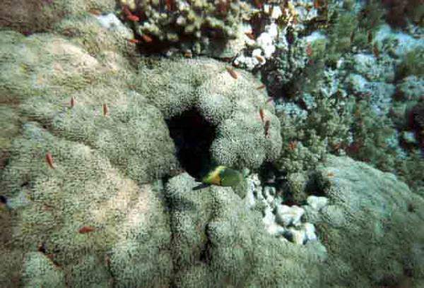 barriera_corallina_1_web_