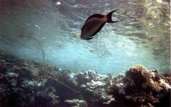barriera_corallina_20_web_