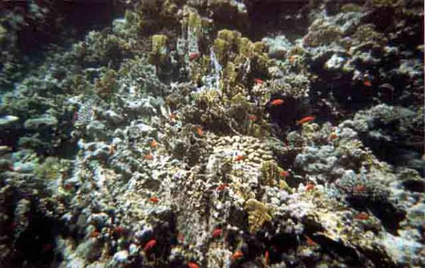 barriera_corallina_23_web_