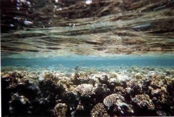 barriera_corallina_25_web_
