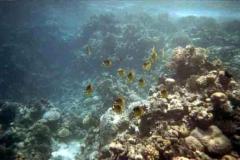 barriera_corallina_10_web_