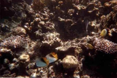 barriera_corallina_12_web_