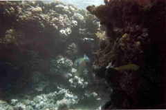 barriera_corallina_15_web_