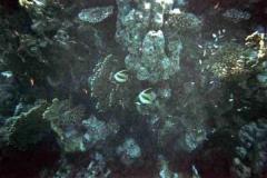 barriera_corallina_16_web_