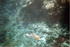 barriera_corallina_19_web_