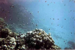 barriera_corallina_21_web_