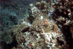 barriera_corallina_22_web_