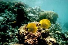 barriera_corallina_2_web_