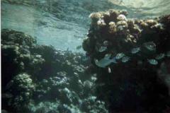 barriera_corallina_3_web_