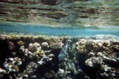 barriera_corallina_4_web_