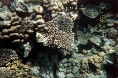barriera_corallina_5_web_