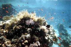 barriera_corallina_6_web_