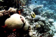 barriera_corallina_7_web_