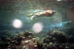 barriera_corallina_9_web_