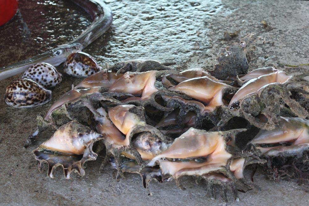 2008-Tonga-44
