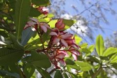 2008-Tonga-17
