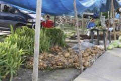 2008-Tonga-38