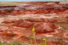 Painted_desert-42