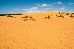 Coral_pink_sands_dunes-15