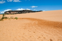 Coral_pink_sands_dunes-16