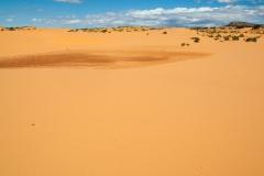 Coral_pink_sands_dunes-18