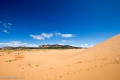 Coral_pink_sands_dunes-23