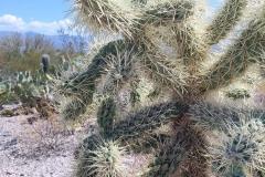Saguaro-2