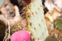 Saguaro-33