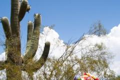Saguaro-34