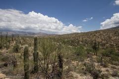 Saguaro-38