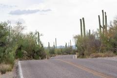 Saguaro-48