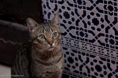 Marocco_2016-530