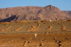 Marocco_2016-259