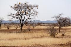 ghepardi-26