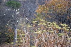ghepardi-29