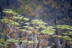 ghepardi-30