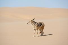 deserto-31