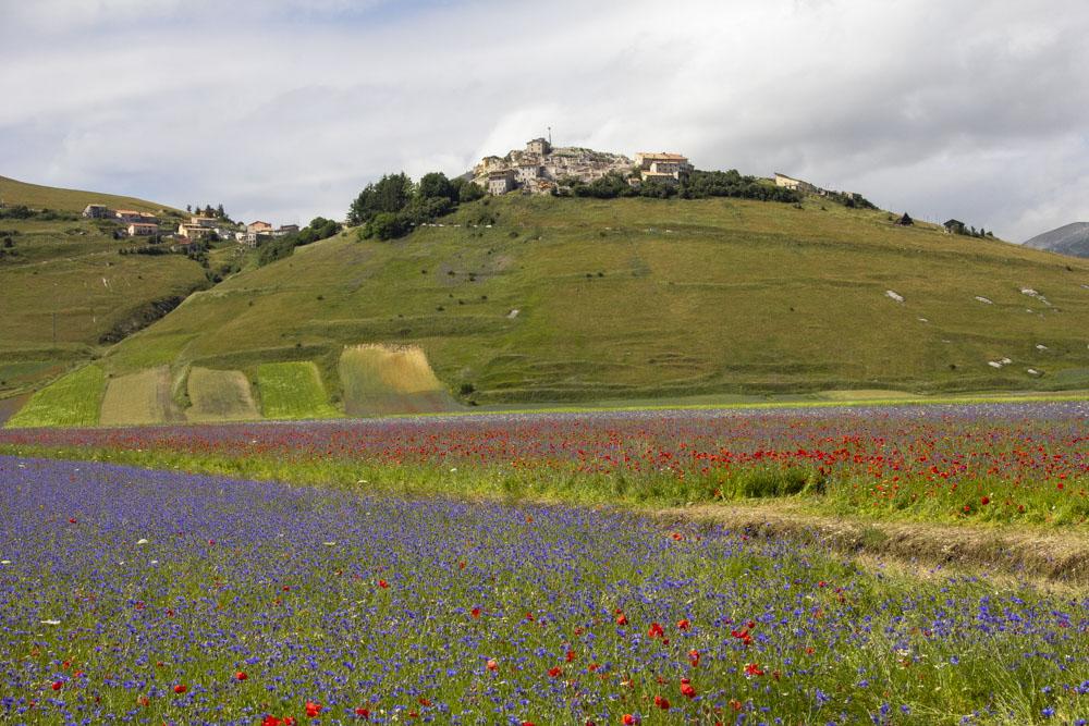 2020-Fioritura-di-Castelluccio-46