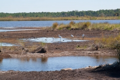st.mark_e_everglades-10