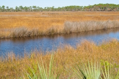 st.mark_e_everglades-13