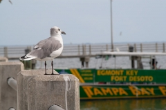 st.mark_e_everglades-43