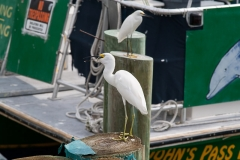 st.mark_e_everglades-44