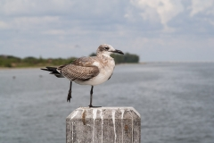 st.mark_e_everglades-46