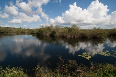 st.mark_e_everglades-54