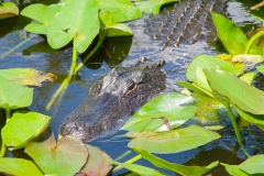 st.mark_e_everglades-62