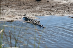 st.mark_e_everglades-9